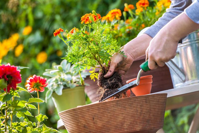 gardening of feng shui